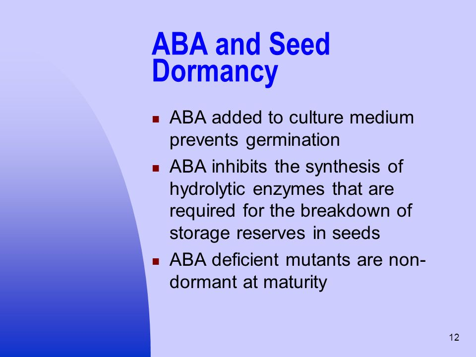 12 ABA and Seed Dormancy ABA added to culture medium prevents germination ABA inhibits the synthesis of hydrolytic enzymes that are required for the b