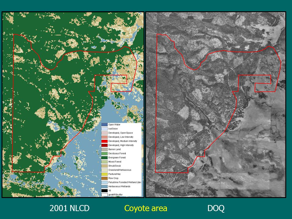 2001 NLCDDOQCoyote area