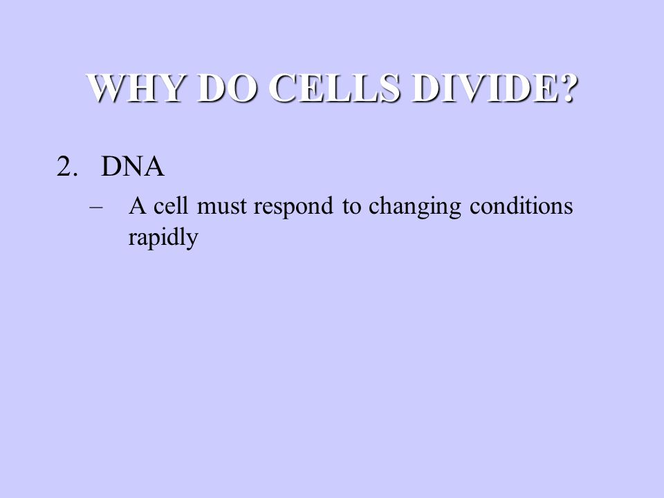 WHY DO CELLS DIVIDE? 2.DNA –A cell must respond to changing conditions rapidly
