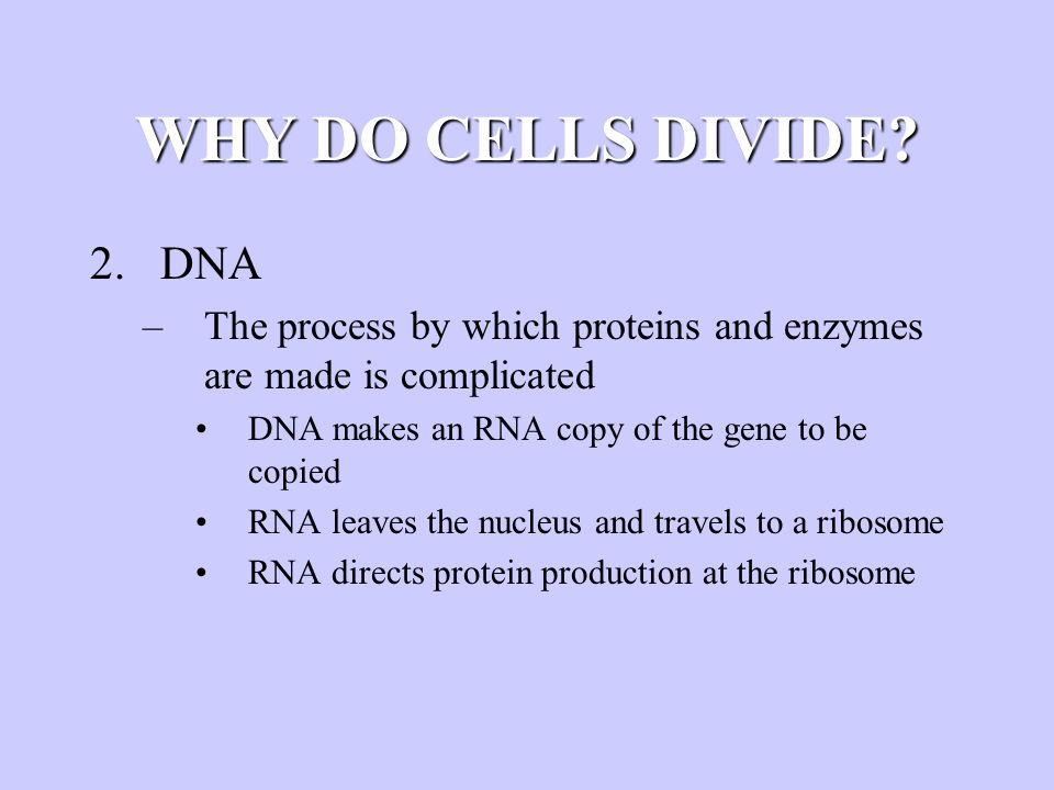 WHY DO CELLS DIVIDE? 2.DNA –The process by which proteins and enzymes are made is complicated DNA makes an RNA copy of the gene to be copied RNA leave