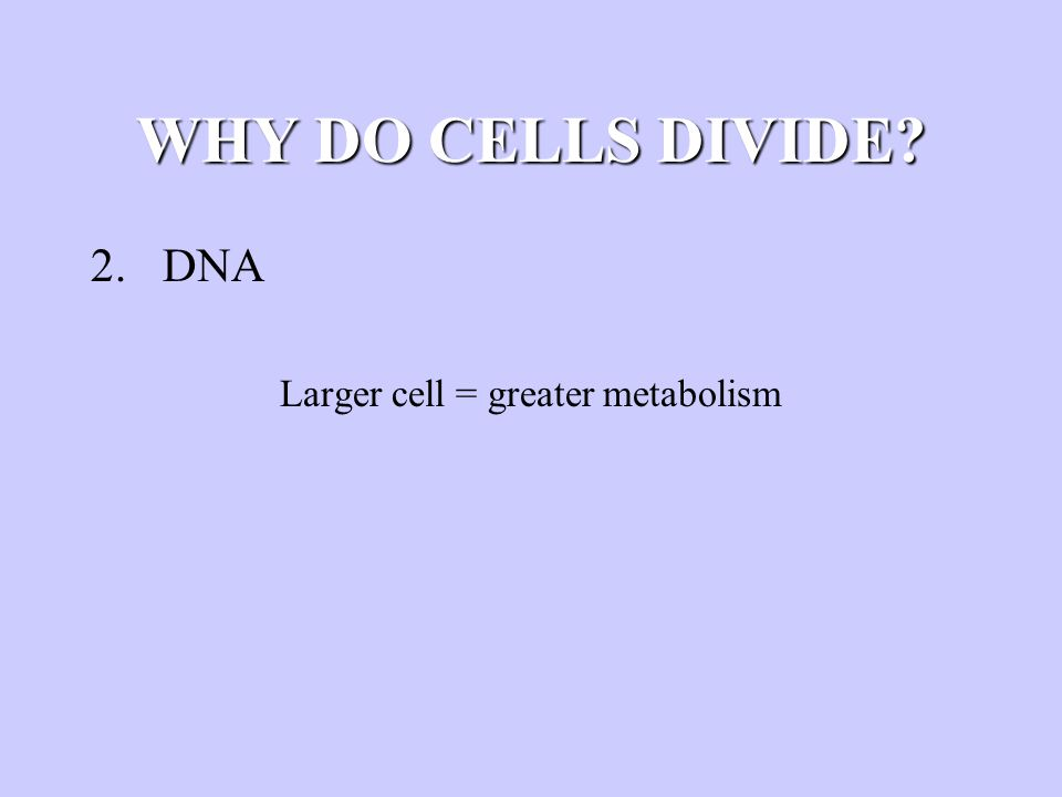 WHY DO CELLS DIVIDE? 2. DNA Larger cell = greater metabolism