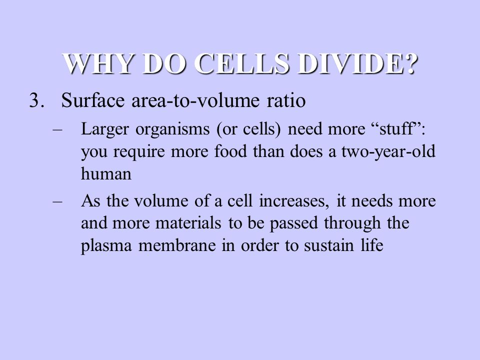 """WHY DO CELLS DIVIDE? 3.Surface area-to-volume ratio –Larger organisms (or cells) need more """"stuff"""": you require more food than does a two-year-old hum"""
