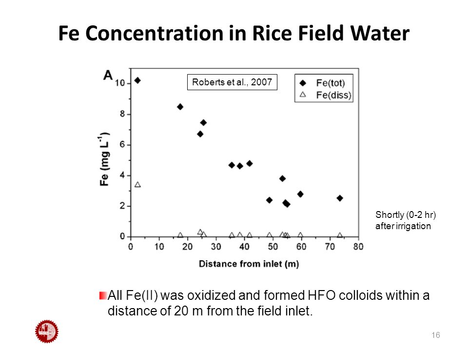 Fe Concentration in Rice Field Water 16 All Fe(II) was oxidized and formed HFO colloids within a distance of 20 m from the field inlet.