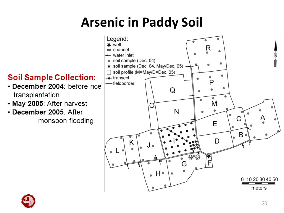 Arsenic in Paddy Soil 20 Soil Sample Collection : December 2004: before rice transplantation May 2005: After harvest December 2005: After monsoon flooding