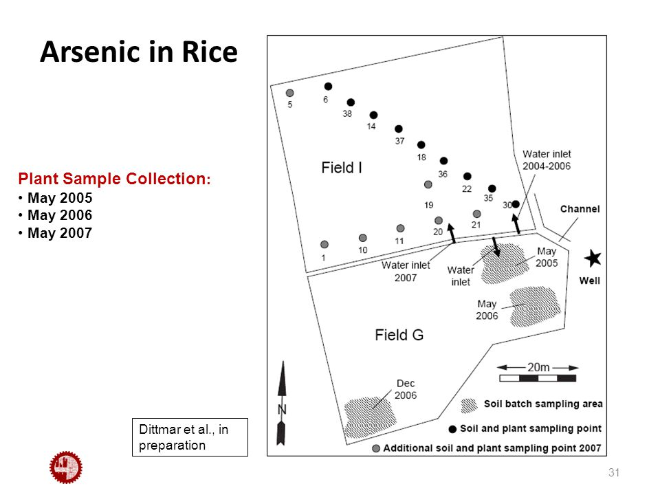 Arsenic in Rice 31 Plant Sample Collection : May 2005 May 2006 May 2007 Dittmar et al., in preparation