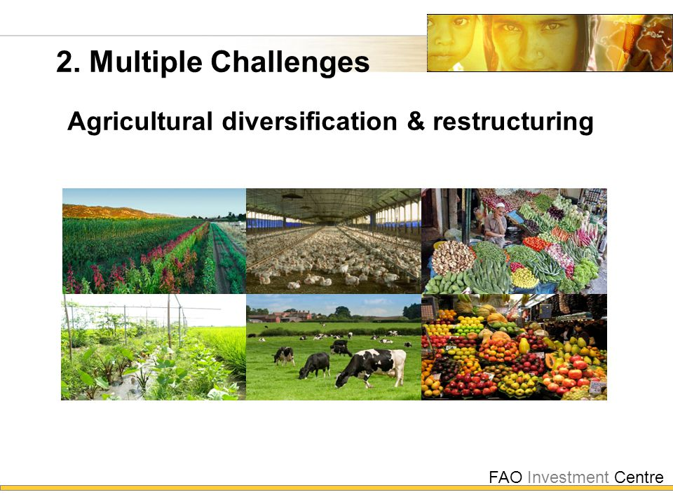 FAO Investment Centre 2. Multiple Challenges Agricultural diversification & restructuring