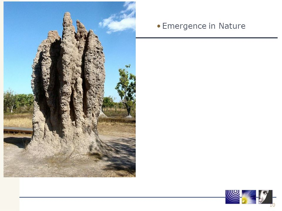 10 Emergence in Nature