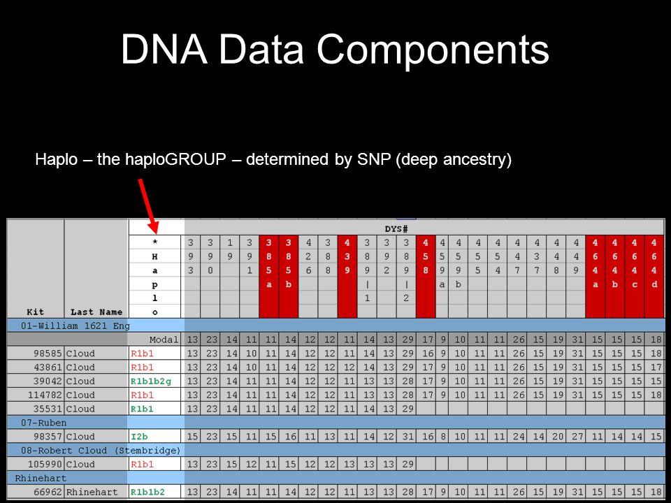 DNA Data Components Haplo – the haploGROUP – determined by SNP (deep ancestry)