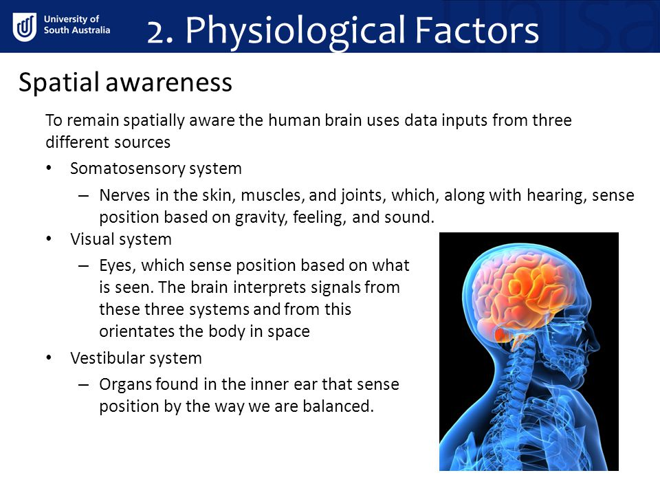To remain spatially aware the human brain uses data inputs from three different sources Somatosensory system – Nerves in the skin, muscles, and joints, which, along with hearing, sense position based on gravity, feeling, and sound.