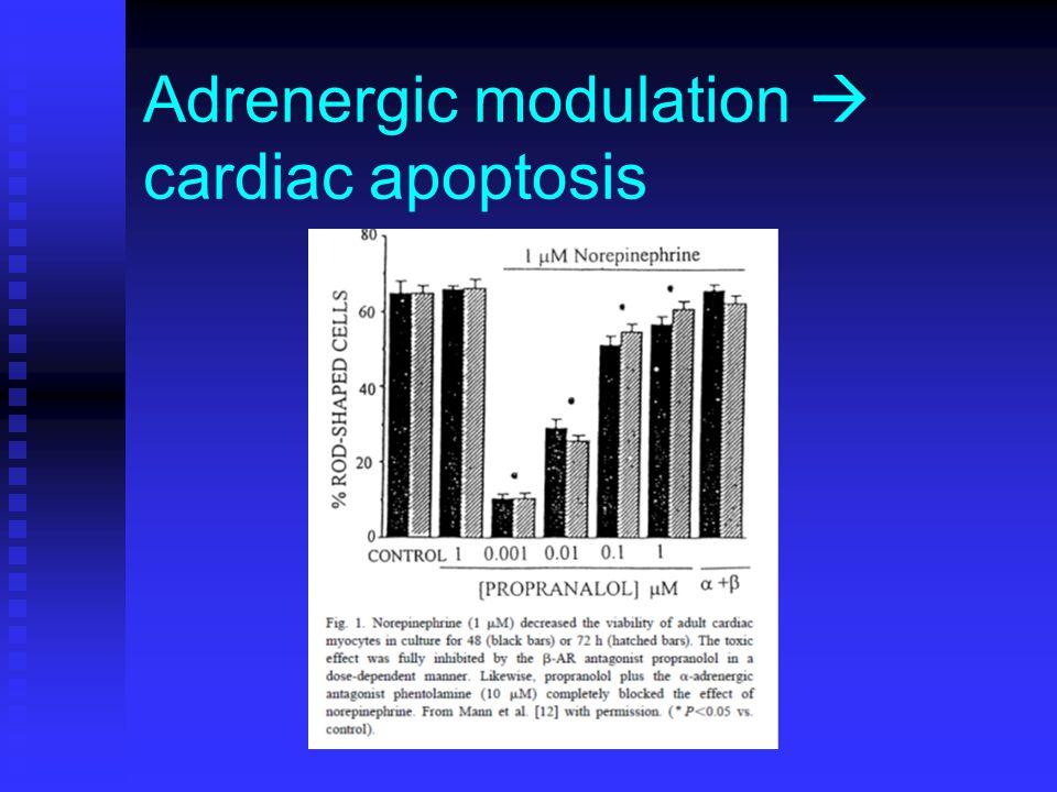 Adrenergic modulation  cardiac apoptosis