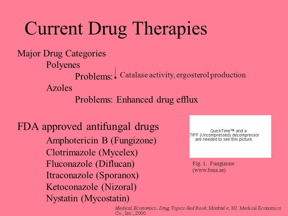 Current Drug Therapies FDA approved antifungal drugs Amphotericin B (Fungizone) Clotrimazole (Mycelex) Fluconazole (Diflucan) Itraconazole (Sporanox)