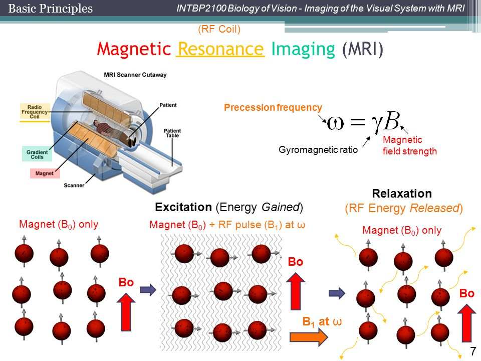 INTBP2100 Biology of Vision - Imaging of the Visual System with MRI 7 Magnetic Resonance Imaging (MRI) Gyromagnetic ratio Magnetic field strength Prec