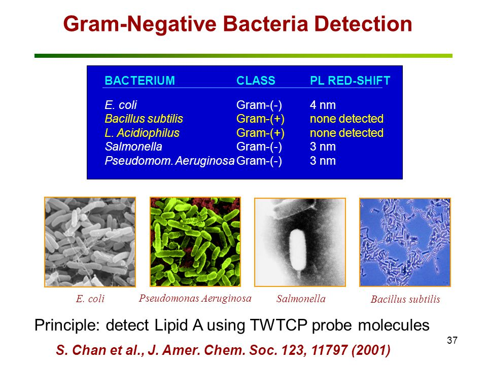 37 BACTERIUMCLASSPL RED-SHIFT E.coliGram-(-)4 nm Bacillus subtilisGram-(+)none detected L.