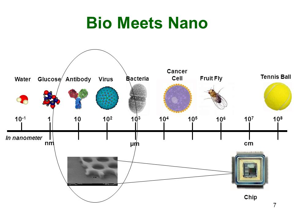 7 Bio Meets Nano In nanometer 10 -1 1 1010 2 10 3 10 4 10 5 10 6 10 7 10 8 nm µm cm WaterGlucoseAntibodyVirus Bacteria Cancer Cell Fruit Fly Tennis Ball Chip