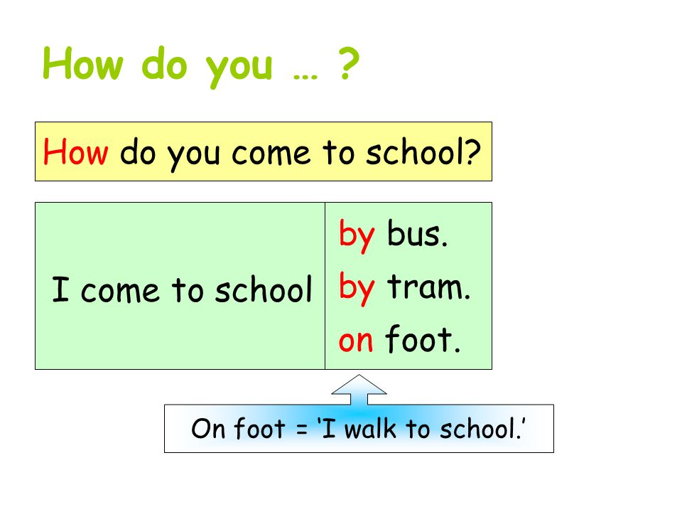 How do you … ? How do you come to school? I come to school by bus. by tram. on foot. On foot = 'I walk to school.'