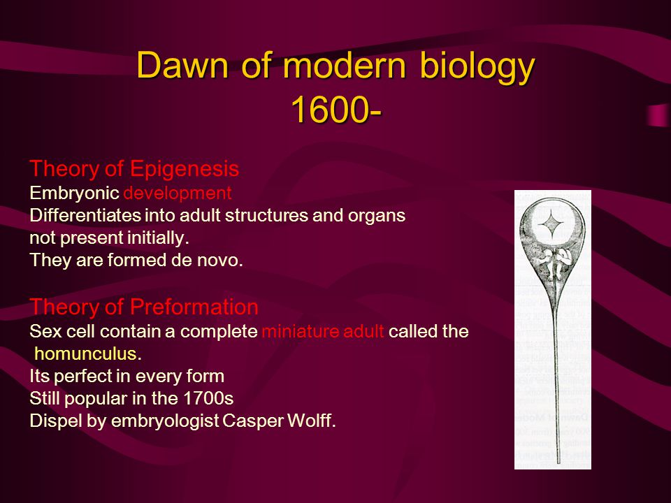 Dawn of modern biology 1600- Theory of Epigenesis Embryonic development Differentiates into adult structures and organs not present initially.