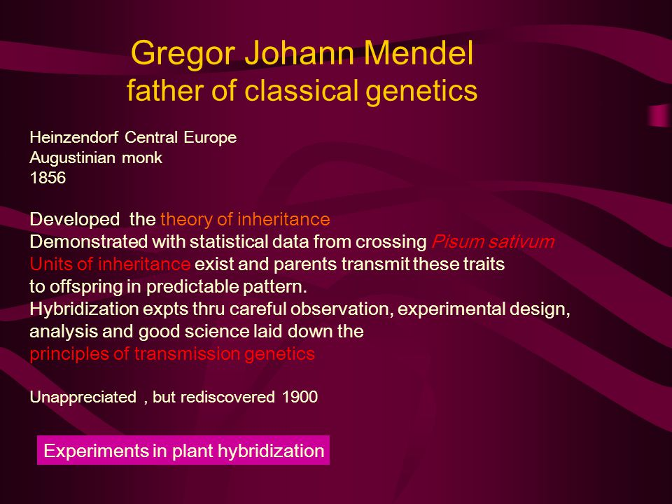 Gregor Johann Mendel father of classical genetics Heinzendorf Central Europe Augustinian monk 1856 Developed the theory of inheritance Demonstrated with statistical data from crossing Pisum sativum Units of inheritance exist and parents transmit these traits to offspring in predictable pattern.