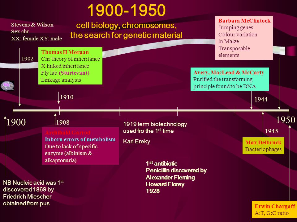 1900-1950 cell biology, chromosomes, the search for genetic material 1900 1950 Stevens & Wilson Sex chr XX: female XY: male 1902 1908 Archibald Garrod