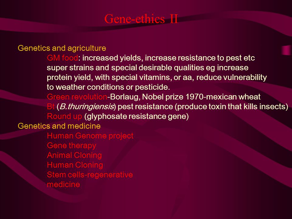 Gene-ethics II Genetics and agriculture GM food: increased yields, increase resistance to pest etc super strains and special desirable qualities eg in