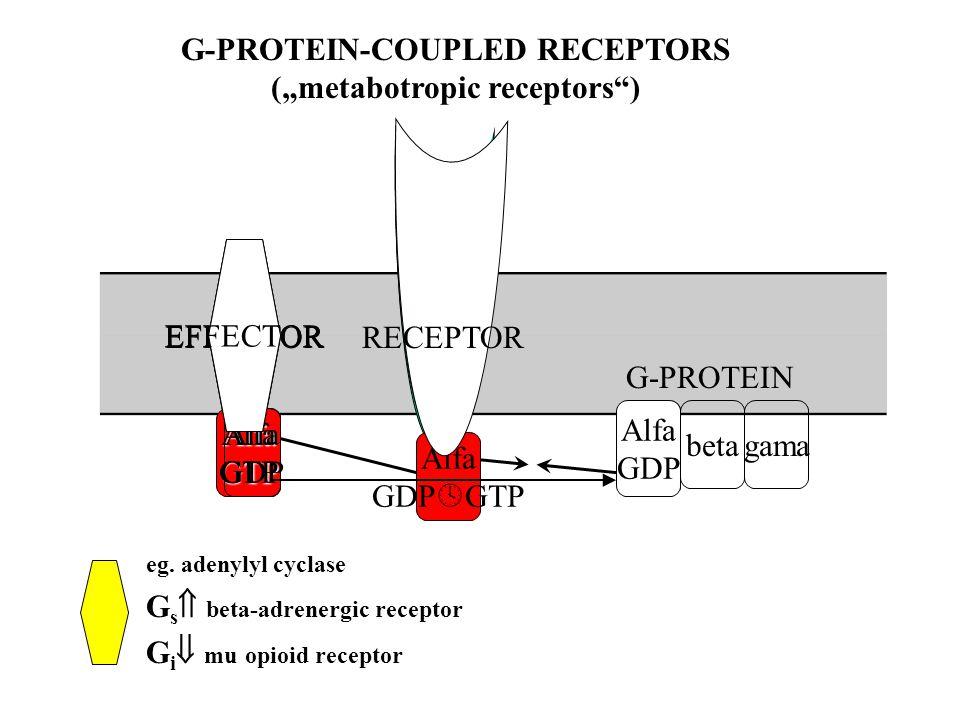 "betagama EFFECTOR Alfa GDP  GTP AlfaGTP Alfa GDP EFFECTOR RECEPTOR G-PROTEIN Alfa GDP G-PROTEIN-COUPLED RECEPTORS (""metabotropic receptors ) eg."