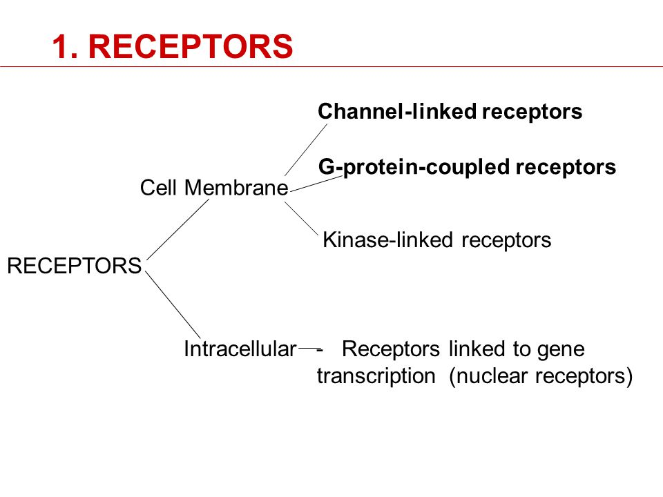 RECEPTORS Cell Membrane Intracellular - Receptors linked to gene transcription(nuclear receptors) Channel-linked receptors G-protein-coupled receptors Kinase-linked receptors 1.