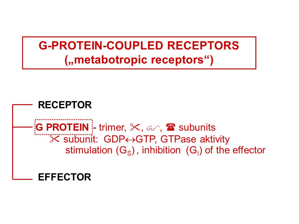 """G-PROTEIN-COUPLED RECEPTORS (""""metabotropic receptors ) RECEPTOR G PROTEIN - trimer, , ,  subunits  subunit: GDP  GTP, GTPase aktivity stimulation (G S ), inhibition (G I ) of the effector EFFECTOR"""