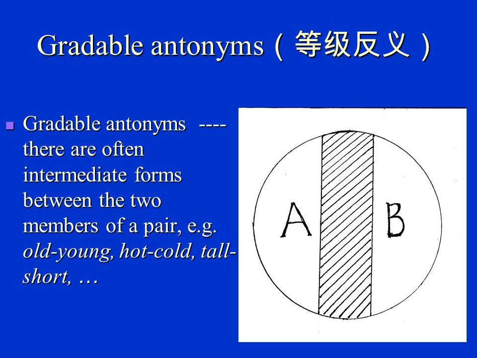 Antonymy Gradable antonyms (等级反义词) ----there are often intermediate forms between the two members of a pair, e.g.