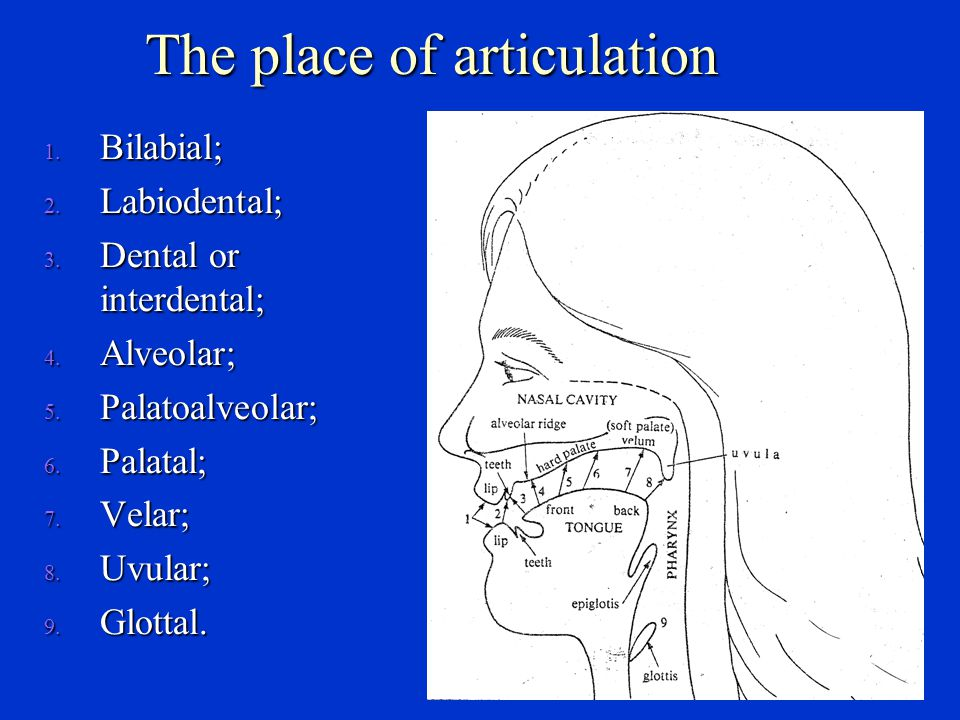 The place of articulation Bilabial (双唇音) : [p], [b], [ m ], [w]; Bilabial (双唇音) : [p], [b], [ m ], [w]; Labiodental (唇齿音) : [f], [v]; Labiodental (唇齿音) : [f], [v]; Dental (齿音) : [  ], [ð], Dental (齿音) : [  ], [ð], Alveolar (齿龈音) : [t], [d], [s], [z], [n], [l], [r]; Alveolar (齿龈音) : [t], [d], [s], [z], [n], [l], [r]; Palatal (腭音) : [ ∫ ], [З], [t ∫ ], [d З], [j]; Palatal (腭音) : [ ∫ ], [З], [t ∫ ], [d З], [j]; Velar (软腭音) : [k], [g], []; Velar (软腭音) : [k], [g], []; Glottal (喉音) : [h].