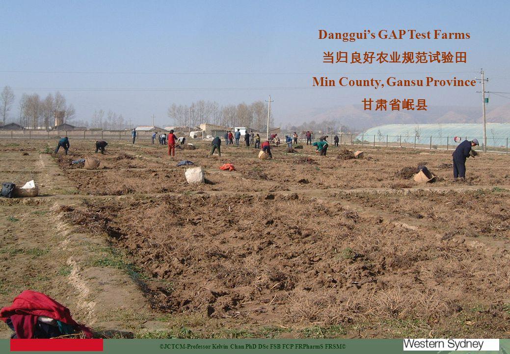 ©JCTCM-Professor Kelvin Chan PhD DSc FSB FCP FRPharmS FRSM© Danggui's GAP Test Farms 当归良好农业规范试验田 Min County, Gansu Province 甘肃省岷县