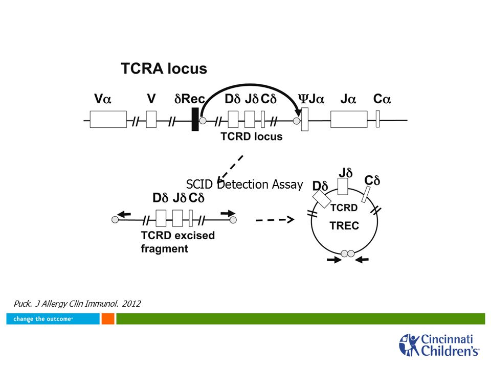 TRECs reflect functional T cells If TREC (or KREC) is detected, it is highly likely that the cell (T or B) has successfully created a template for a productive (and unique) T cell receptor or immunoglobulin This process underlies the diversity of functional T and B lymphocytes