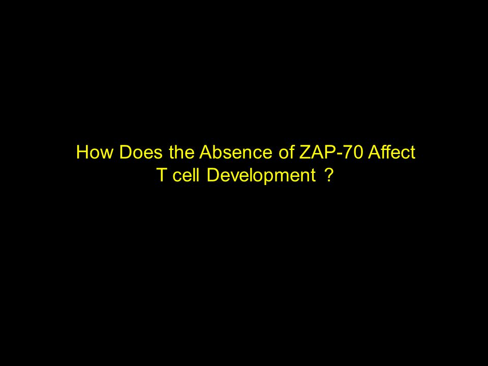 How Does the Absence of ZAP-70 Affect T cell Development ?
