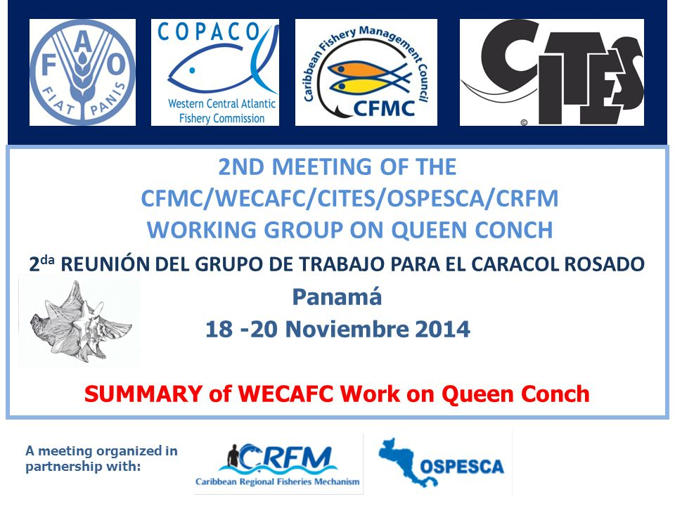 International Queen Conch Conference, Puerto Rico, July 29-31, 1996 – Organized by CFMC Queen conch work in the region until 2000 largely led by CFMC – provision of advice to WECAFC sessions 10 th session of WECAFC (2001) the Commission requested stronger collaboration with CFMC and organization of joint workshop(s) February 2007 (Panama)– Workshop on improvement of information on status and trends of queen conch capture fishery in the Caribbean Region.