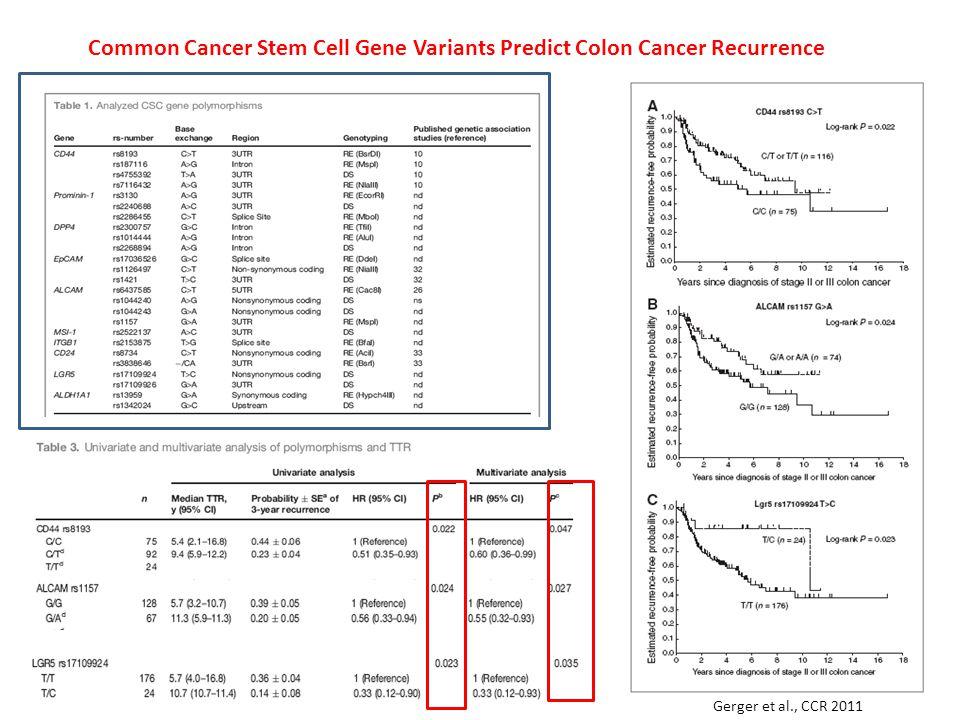 Common Cancer Stem Cell Gene Variants Predict Colon Cancer Recurrence Gerger et al., CCR 2011