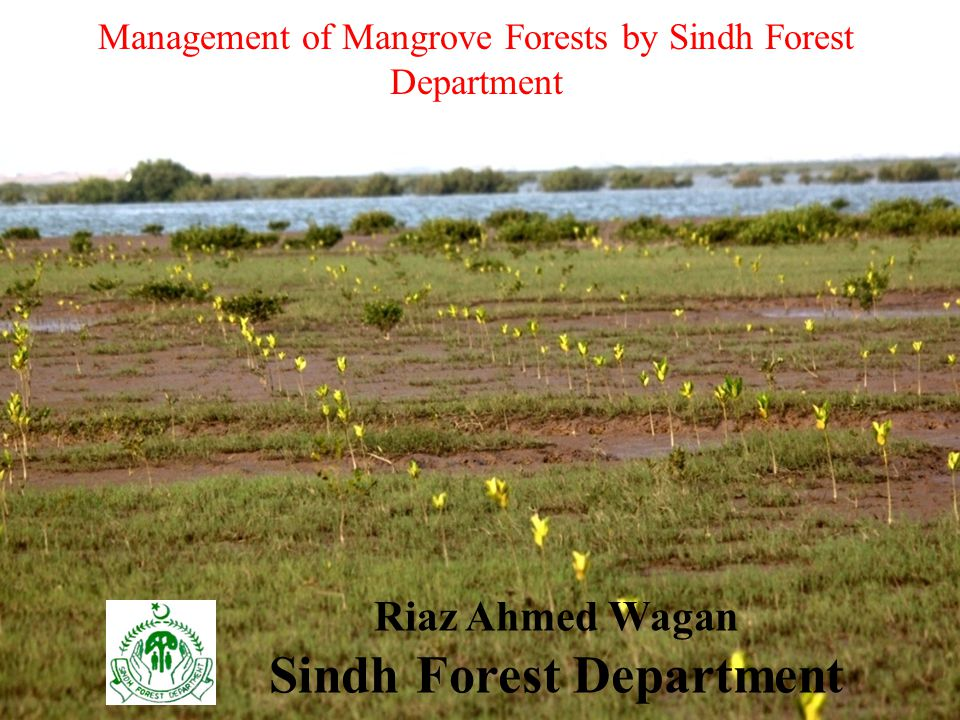 Management of Mangrove Forests by Sindh Forest Department Riaz Ahmed Wagan Sindh Forest Department