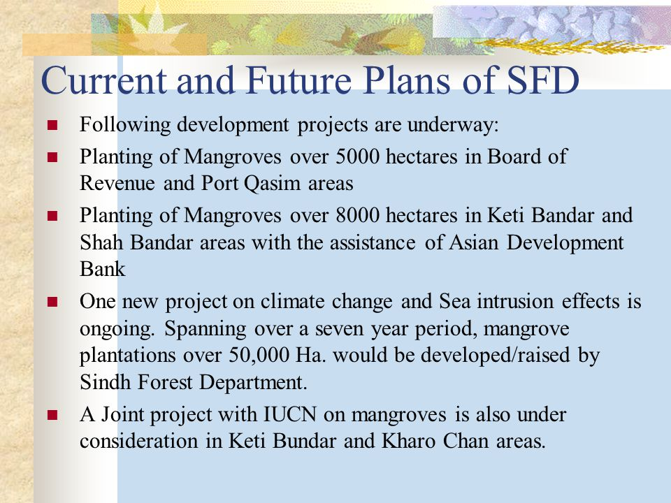 Current and Future Plans of SFD Following development projects are underway: Planting of Mangroves over 5000 hectares in Board of Revenue and Port Qasim areas Planting of Mangroves over 8000 hectares in Keti Bandar and Shah Bandar areas with the assistance of Asian Development Bank One new project on climate change and Sea intrusion effects is ongoing.