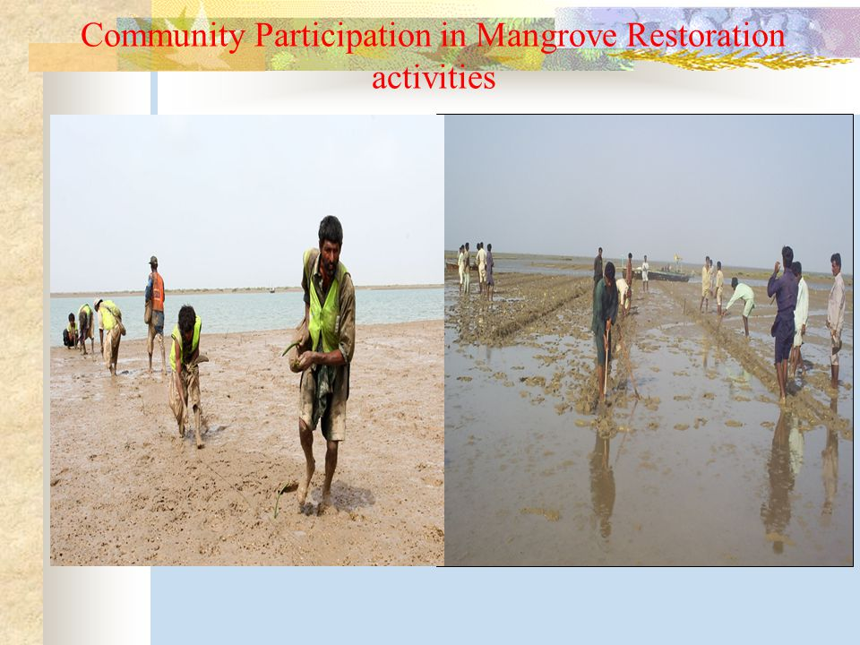 Community Participation in Mangrove Restoration activities