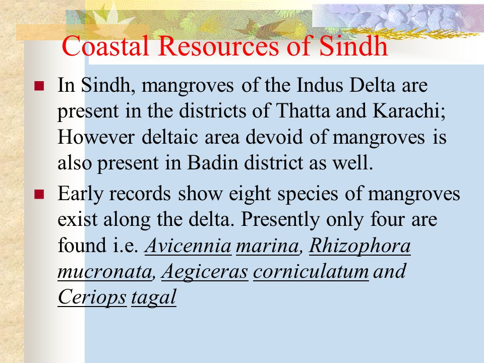 Coastal Resources of Sindh In Sindh, mangroves of the Indus Delta are present in the districts of Thatta and Karachi; However deltaic area devoid of mangroves is also present in Badin district as well.