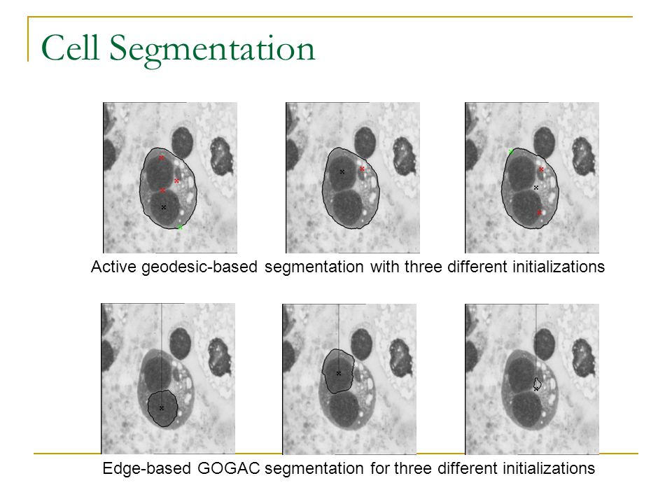 Cell Segmentation Edge-based GOGAC segmentation for three different initializations Active geodesic-based segmentation with three different initializations