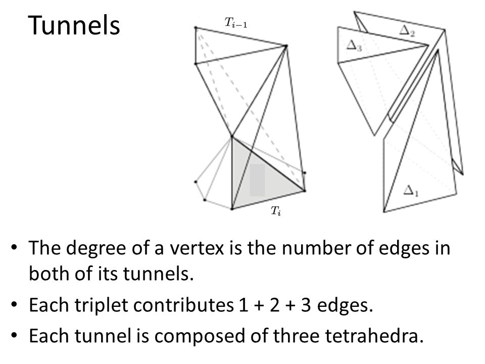 Tunnels The degree of a vertex is the number of edges in both of its tunnels.