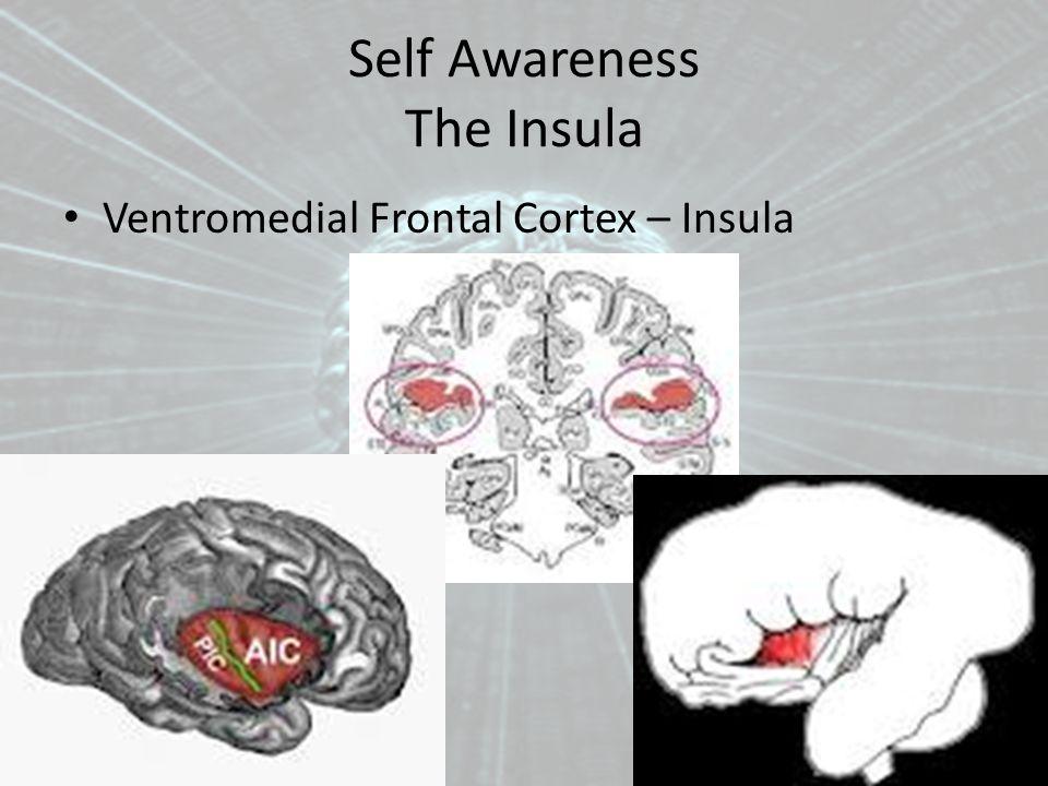 Self Awareness The Insula Ventromedial Frontal Cortex – Insula