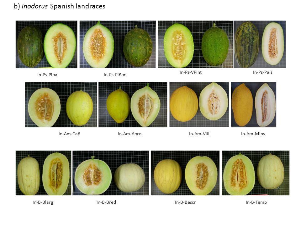 In-Ps-PipaIn-Ps-Piñon In-Ps-VPintIn-Ps-Pais In-Am-CañIn-Am-VillIn-Am-AoroIn-Am-Minv In-B-BlargIn-B-BredIn-B-BescrIn-B-Temp b) Inodorus Spanish landrac