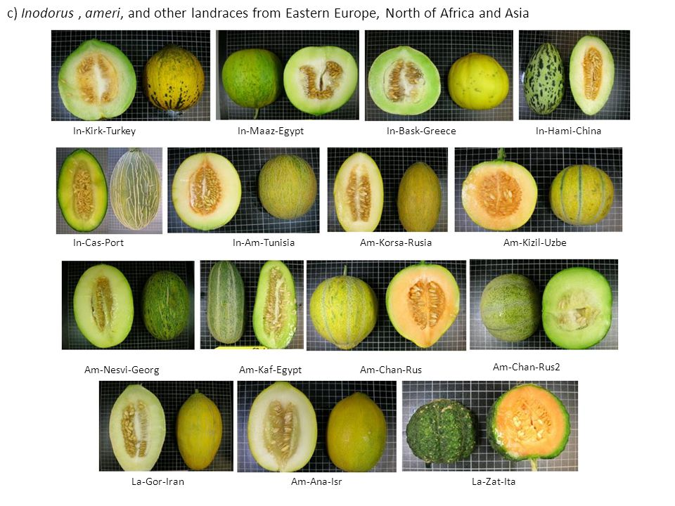 d) Cantalupensis and reticulatus accessions Can-TopCan-CA Can-DulCan-NO Can-NCCan-NYCan-PMR Can-Pres Can-VedCan-WiCan-PopCan-Sm Can-GCHCan-GHCan-Y Can-HBJ