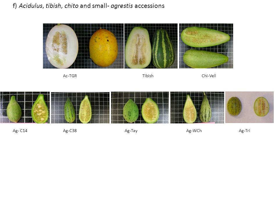 Ac-TGRTibishChi-Vell Ag- C14Ag-C38Ag-TayAg-WChAg-Tri f) Acidulus, tibish, chito and small- agrestis accessions