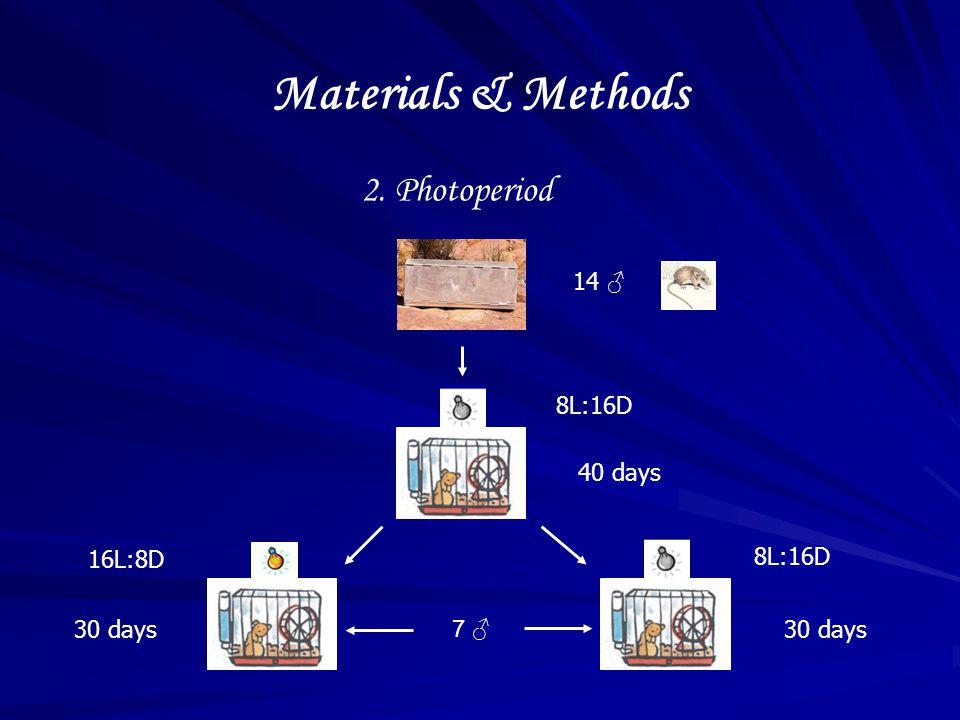 2. Photoperiod 14 ♂ 8L:16D 7 ♂ 16L:8D 40 days 30 days Materials & Methods
