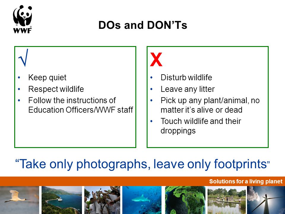 Solutions for a living planet DOs and DON'Ts  Keep quiet Respect wildlife Follow the instructions of Education Officers/WWF staff X Disturb wildlife