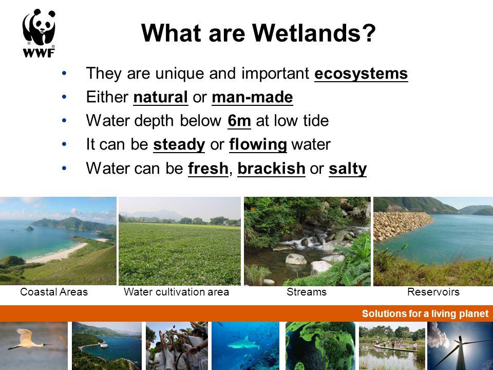 Solutions for a living planet Mai Po environment Mudflat Mangrove