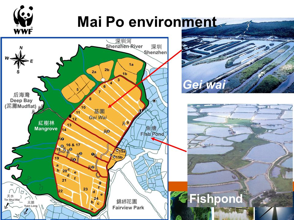Solutions for a living planet Mai Po environment Gei wai Fishpond