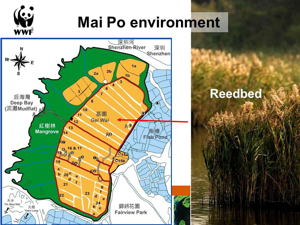 Solutions for a living planet Mai Po environment Freshwater wetland
