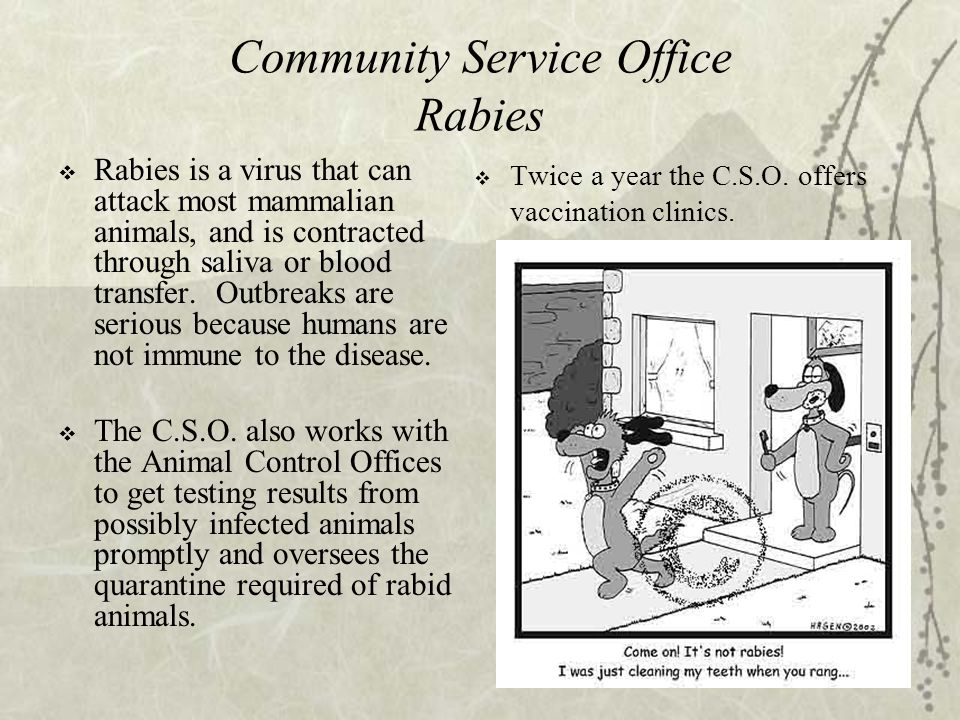 19 Community Service Office Rabies  Rabies is a virus that can attack most mammalian animals, and is contracted through saliva or blood transfer.