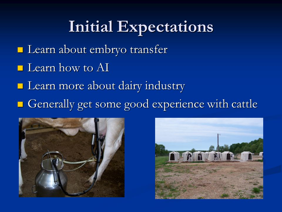 Initial Expectations Learn about embryo transfer Learn about embryo transfer Learn how to AI Learn how to AI Learn more about dairy industry Learn more about dairy industry Generally get some good experience with cattle Generally get some good experience with cattle
